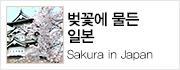 상상만으로도 설레는 일본 벚꽃 여행, 봄향기를 만끽해보세요!